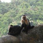 Monos en Parque Manuel Antonio