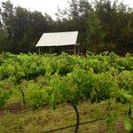 scenic winery walks.