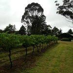 walking through the vines!