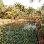 Zauberhafte Gartenanlage
