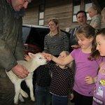 Lamb Time