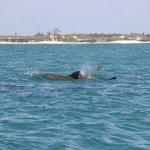 Delfini alle mangrovie