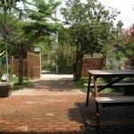 Front garden with jackfruit trees