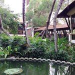 Lush surroundings and a fish pool