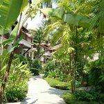 beautiful tropicano walkway