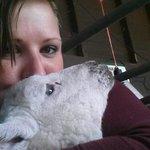 Lamb cuddle