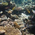 коралловые рифы велассару мальдивы