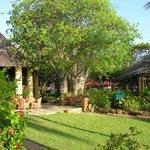 restaurant et bar de part et d autre du baobab