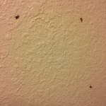 Little flying insects on the walls of my room. They didn't bite.