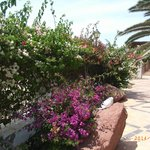 site is well maintained andhas nany beautiful shrubs
