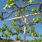 Grape trellis over the terrace