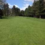 5th pines