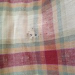 Mold on dining room chair cushions