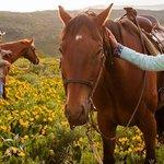 June horseback ride
