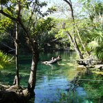 Scenic view of one of larger cenote