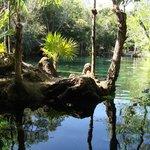 swimming cenote