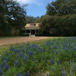 Cottage flanked by Bluebonnets