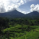 Jatiluwih Rice Fields with Volcanoes in the background