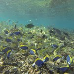 The house reef teeming with fish