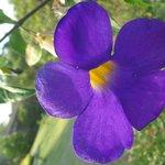 wunderschöne Anlage mit Blumen