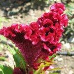 Des fleurs particulières attendent le visiteur curieux.