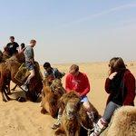 camel dismounting