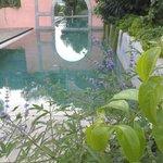 La nostra piscina immersa nel verde della tenuta