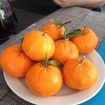 The best mandarins I have ever tasted!!