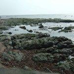 静岡最南端の木柱の裏にあり、引き潮になると出現する岩場