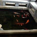 Goldfish pool in courtyard