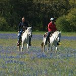 Horseback riding among the wildflowers