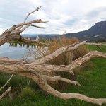 Natures sculptures at Eagles Nest 2