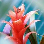 Flor en el jardin