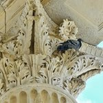A pigeon eyes passersby from the top of a Corinthian column at the Maison Carree