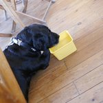 Winston our black lab get's waitress service too!