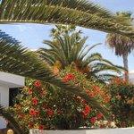 La végétation de l'hotel Hibiscus , palmiers dattiers...
