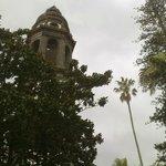 Torre, palmera y araucaria, compiten por tocar el cielo.