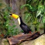 1000s of exotic birds