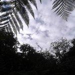 looking through trebah canopy