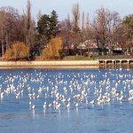 Seagulls on the Herastrau lake