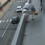 Feeding the birds!