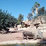 Habitat sabana africana, cebras y rinoceronte