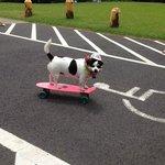 Bali showing us his skateboarding skills!