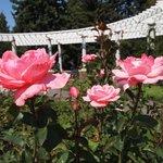 Rose Gaden