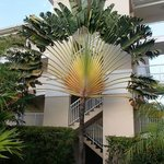 Cool palm near our room