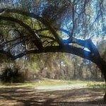 Oaks at Santa Rosa Plateau