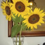 Sunflowers from Italy