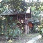 Jungle Hutst