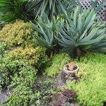 Patio Garden at Lodge