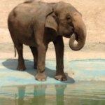 One of the elephants